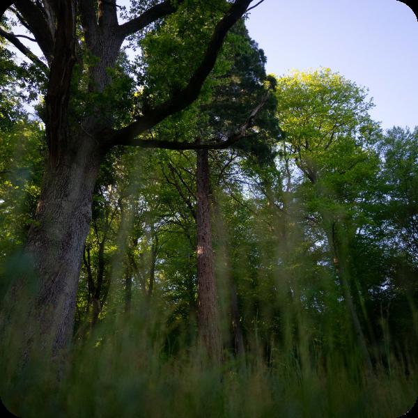 Auf dem Bild sieht man die Ettental typischen Bäume