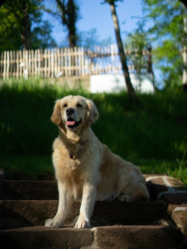 Auf dem Bild sieht man den Hund der Familie von Schwind.