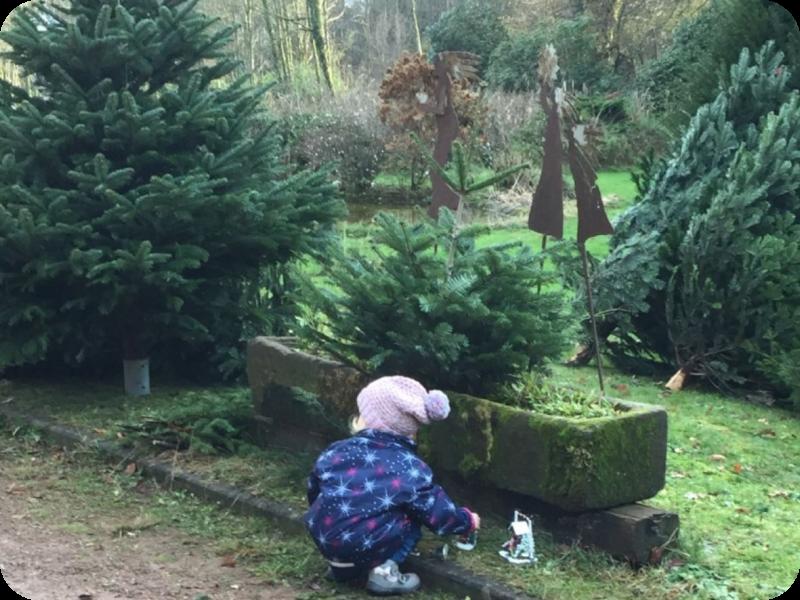 Ein Kind beim begutachten eines Weihnachtsbaumes